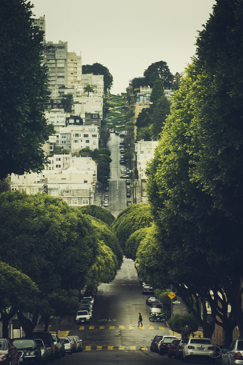 "velophoto:  evocativesynthesis:  Lombard street - San Francisco (by Danilo Fermata)  a deviation from my usual ""roads to ride"" theme. I hate city traffic, polluted air and stuff - but this looks cool enough in my book and hey, it's SF ;-)"