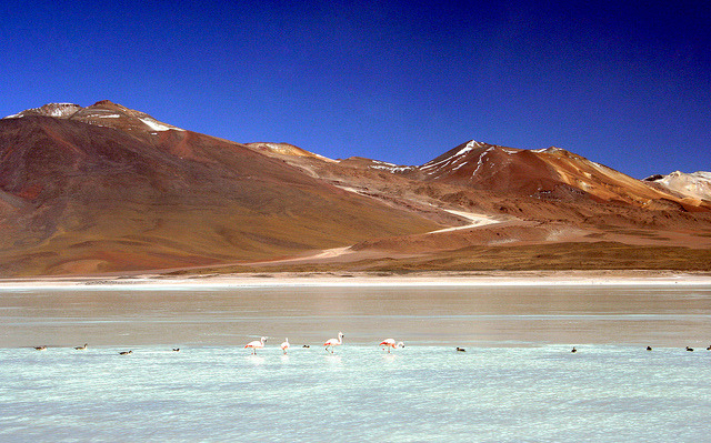 20071103   Flamingos, Laguna Blanca, Bolivia 007 by gakout on Flickr.