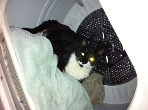 get out of there cat, you're not laundry and you don't need to be folded. *psa to always check your dyers for curious kitties before starting the cycle*