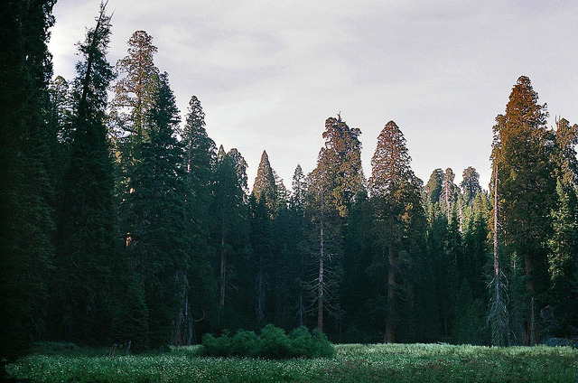 fiskarna:  sequoia national park by Megan Brim on Flickr.
