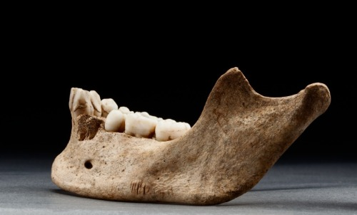 "smithsonianmag:  Starving Settlers in Jamestown Colony Resorted to Eating a Child The harsh winter of 1609 in Virginia's Jamestown Colony forced residents to do the unthinkable. A recent excavation at the historic site discovered the carcasses of dogs, cats and horses consumed during the season commonly called the ""Starving Time."" But a few other newly discovered bones in particular, though, tell a far more gruesome story: the dismemberment and cannibalization of a 14-year-old English girl. Find out how researchers made this discovery at Smithsonian.com."