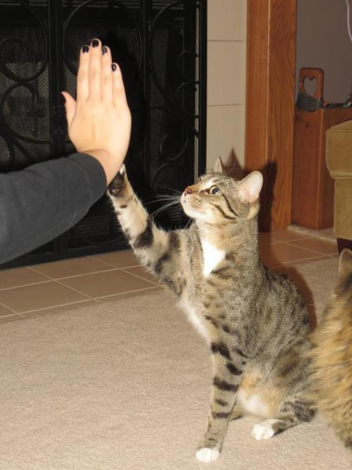 High Five, Bro! Photo via Imgur