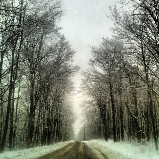 #snow #trees #road #backroad #newyork #cny #march #2013