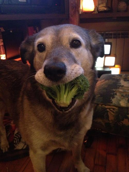 overtheunderpass:  look at this dog eating this broccoli