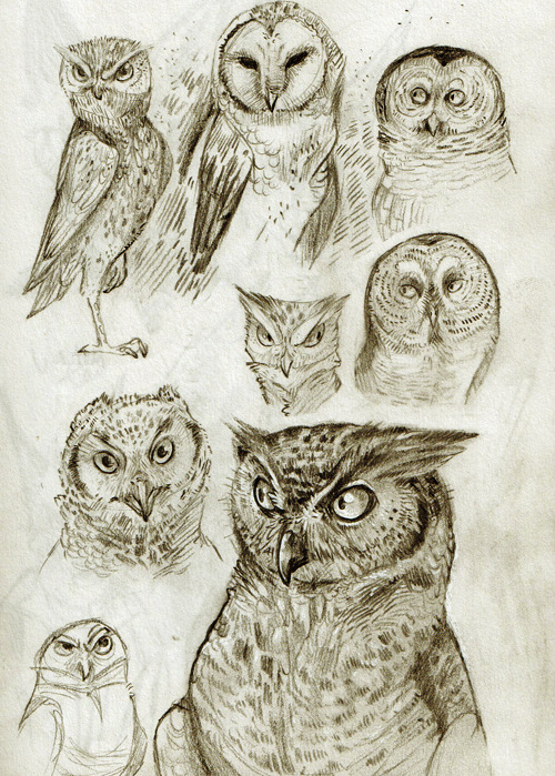 MERRY CHRISTMAS, here are some dopey owls for you