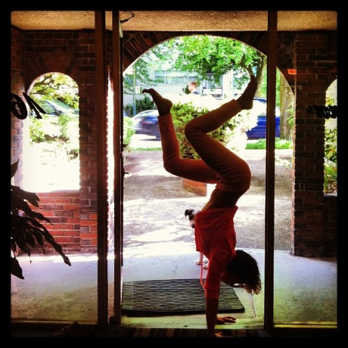 Day 18 - Handstand in a doorway. Can you spot Cedar Dove?