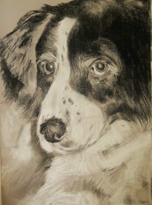 "All finished with the dog commission.  Chalk and Charcoal on 18""x24"" on gray paper."
