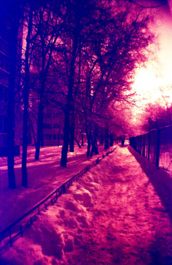 lomographicsociety:  Lomography in Colors - Fresh Eggplant