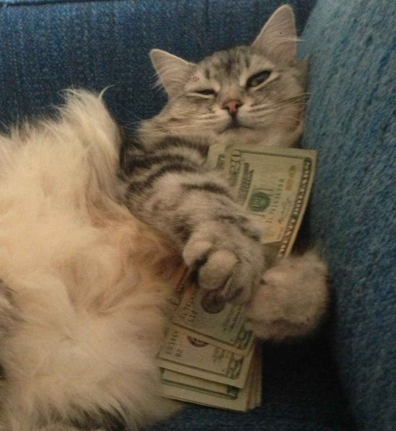 cashcats:  ya boy wallace