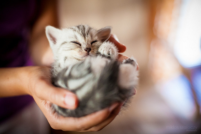 closings:  A handful of smile by Miklos Szaloczy on Flickr.