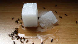 mothernaturenetwork:  13 natural remedies for the ant invasion Ants are making their way into homes this time of year. Thankfully there are natural pest control methods to help you cope with and eliminate the problem. Plus, many of the solutions use what you already have in your cupboard!