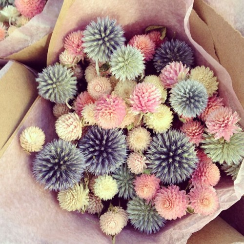 Beautiful dried thistles #easter  (at Union Square Greenmarket)