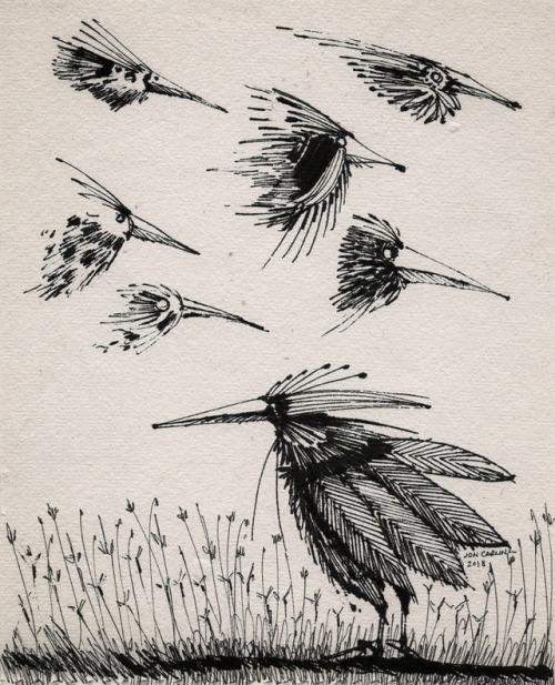 drawing jon carling ink birds friends paper beaks