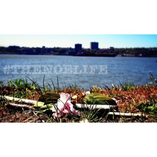 #Flowers on the #Hudson (#photography #thenoelife)