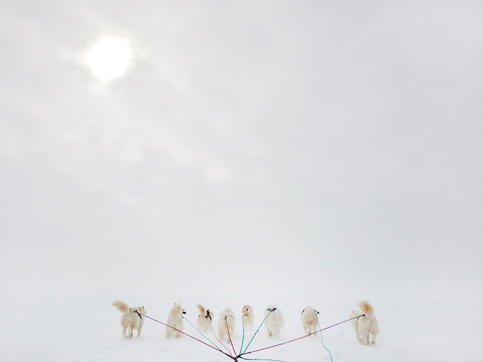 "Igloolik, Canada Photograph by Michelle Valberg ""The light snow falling with a hint of the sun peeking through the clouds made our dogsled ride in Igloolik appear as though we were riding into heaven,"" photographer Michelle Valberg says. Igloolik is in Canada's Nunavut territory, rich in Inuit culture and teeming with wildlife."