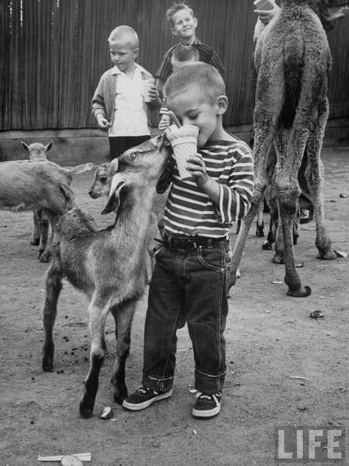 sinuses:  Children's zoo, San Diego, 1959.  Photo:  Allan Grant