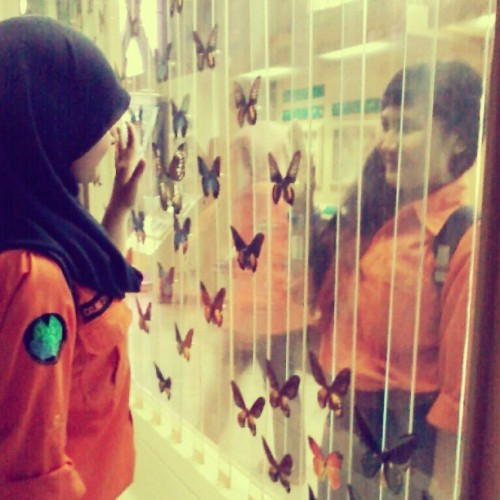 @ LIPI w/ winda septiana #filedtrip #entomology #brightonorange #lepidoptera
