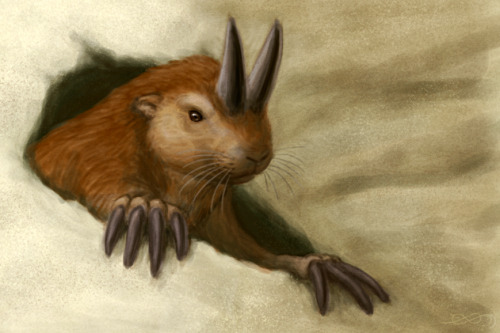 "alphynix:  The ""horned gopher"", Ceratogaulus, The only rodent known to have horns. These prairie-dog-sized guys were found in the great plains of North America between about 17 and 5 million years ago. The exact purpose of their horns has been the subject of a lot of speculation, but the most likely explanation is that they provided some sort of defense against predators."