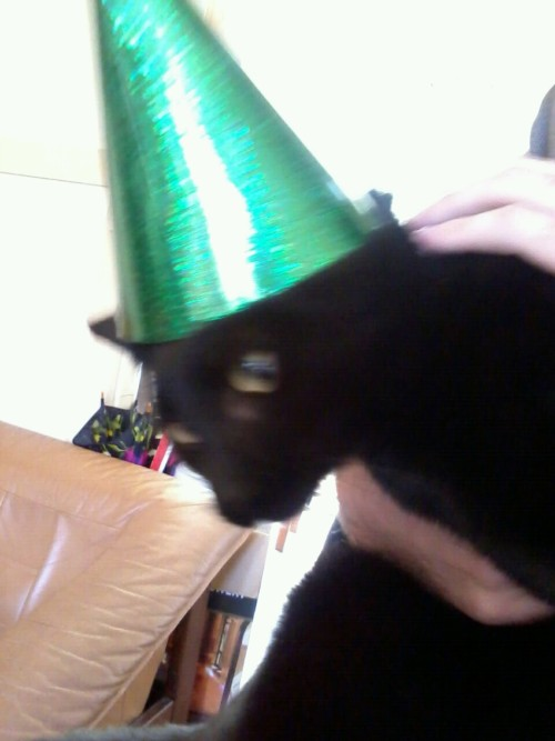 lazypoems:  This is our cat Bruce Willis. He is ready to party.  shout outs to hoodrichest, this is my party cat. he wear hats and sequins sometimes and has a sparkly collar.