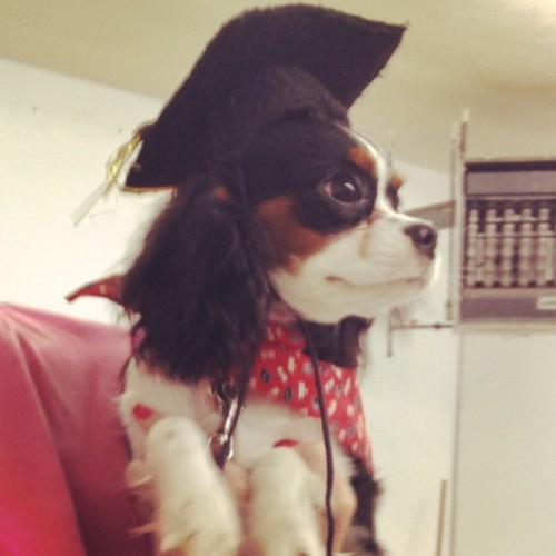 SO PROUD of my little girl for graduating from Puppy School and passing the AKC Star Puppy Test!