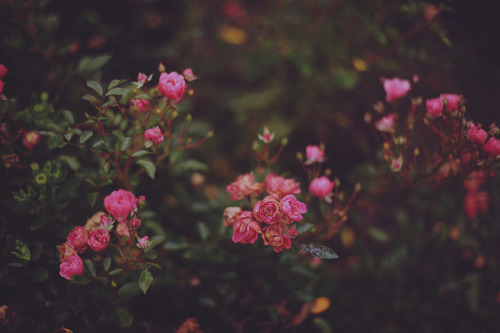 floralls:Thinking about you on a rainy afternoon (by *Nishe)