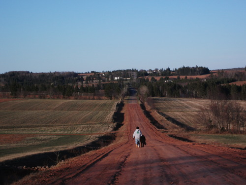 aristocraticnorth:  Oh the red dirt road! I can't wait until things start growing though… PEI has the most vivid colours, with its red red soil, the greenest greens, and the most beautiful blue sky of any place I've ever been.