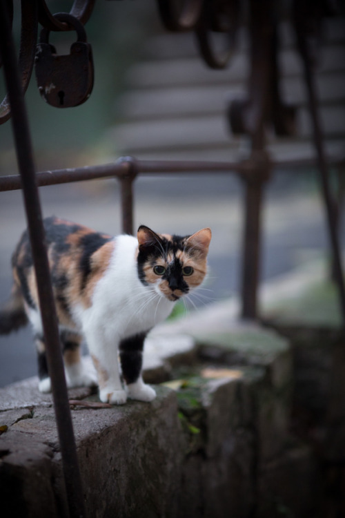photogenicfelines:  (денис храбров)