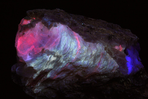 themineralogist:  Thin plates of calcite, with non-fluorescent heulandite at lower right and blue fluorite at extreme right, in brecciated schist (under ultraviolet)