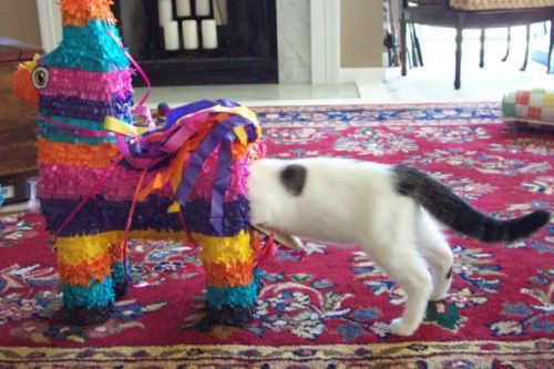 jainz:  I love how surprised the piñata looks.