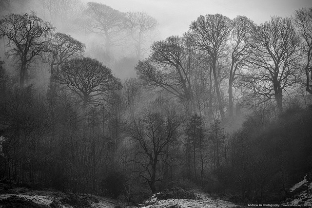 trees in the mist by awhyu on Flickr.