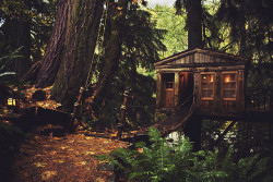 tree beautiful hippie design boho indie peaceful nature outdoors forest fairy lights calm bohemian cabin relax freedom treehouse love this Serenity free fairy artsy leaves Woods fairytale tree house free spirit log cabin earthy tree people