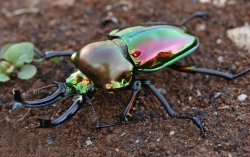 photography animals beautiful bugs insects reptiles aesthetic