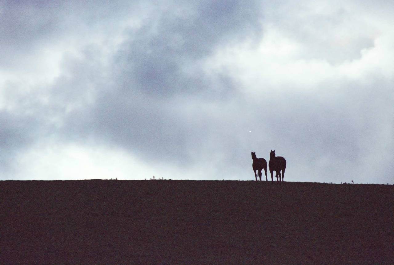Some horses on a Hill.