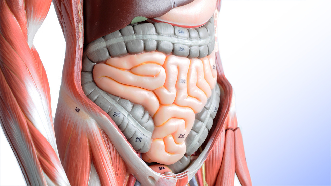 "What's In Your Gut? Ask Citizen Science | Co.Exist The American Gut Project is trying to create a better picture of the human ""microbiome."" Give it some of your info, and they'll tell you a lot about all the bugs that make up your digestive system and how they're affecting your health."