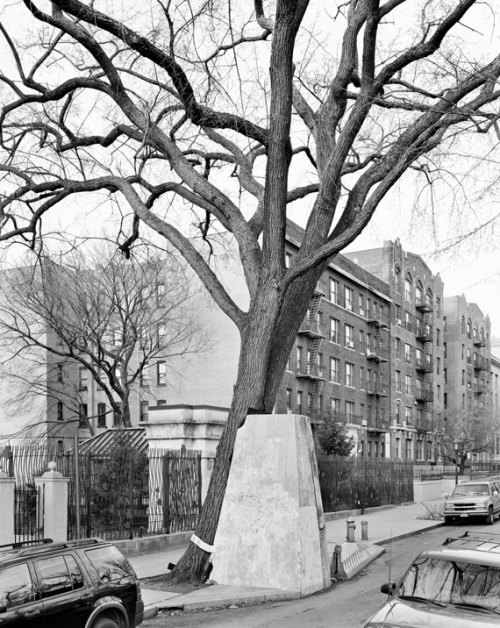 New York Arbor by Mitch Epstein. I used to walk by this particular tree every day when I lived in Prospect Heights, Brooklyn and always thought it was an oddity.  Check out Epstein's book here.