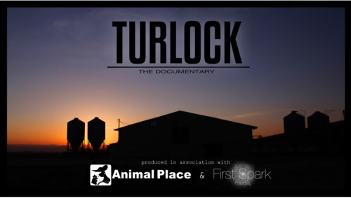 animalplace:  Our full-length documentary will be released this Friday, free to anyone interested in watching. We are very excited about this film, which covers Animal Place's largest rescue…over a two-day period last year, we coordinated the rescue of 4,460 hens from a 50,000 hen egg farm. The birds had been left without food for more than two weeks. This is their story. We can't wait to share it with you!