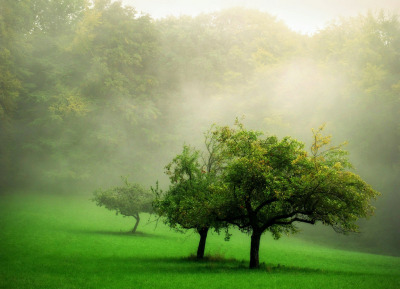 Applegreen (by BphotoR)
