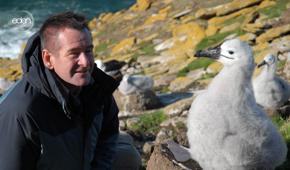 What do you think this black-browed albatross chick makes of Nigel Marven? To see more, watch Nigel Marven in Killer Whale Island today at 2pm & 6pm.