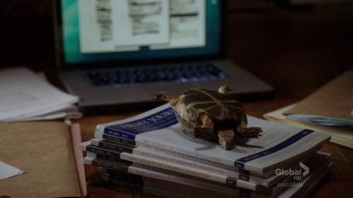 suecollins:  Joan: I'm pretty sure you shouldn't use Clyde as paperweight.Sherlock: I don't think he minds.