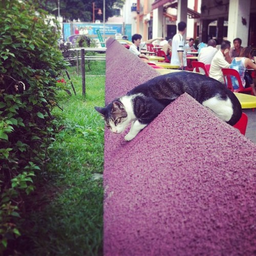 Saw this cat draped over a triangular wall. She was sleeping, but I accidentally woke her up with the camera sound.