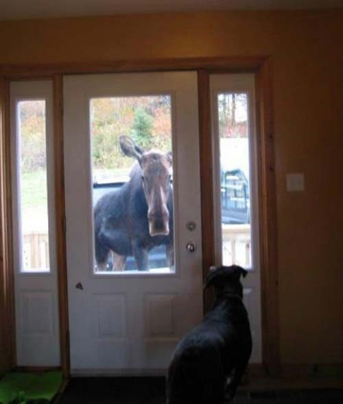 Mom.. I think there's someone at the door for you
