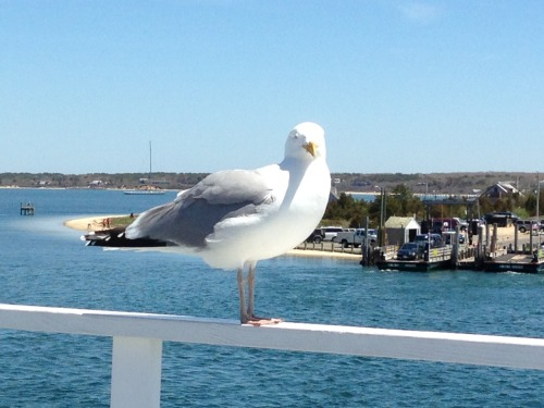 Seagull taken by my mom :)