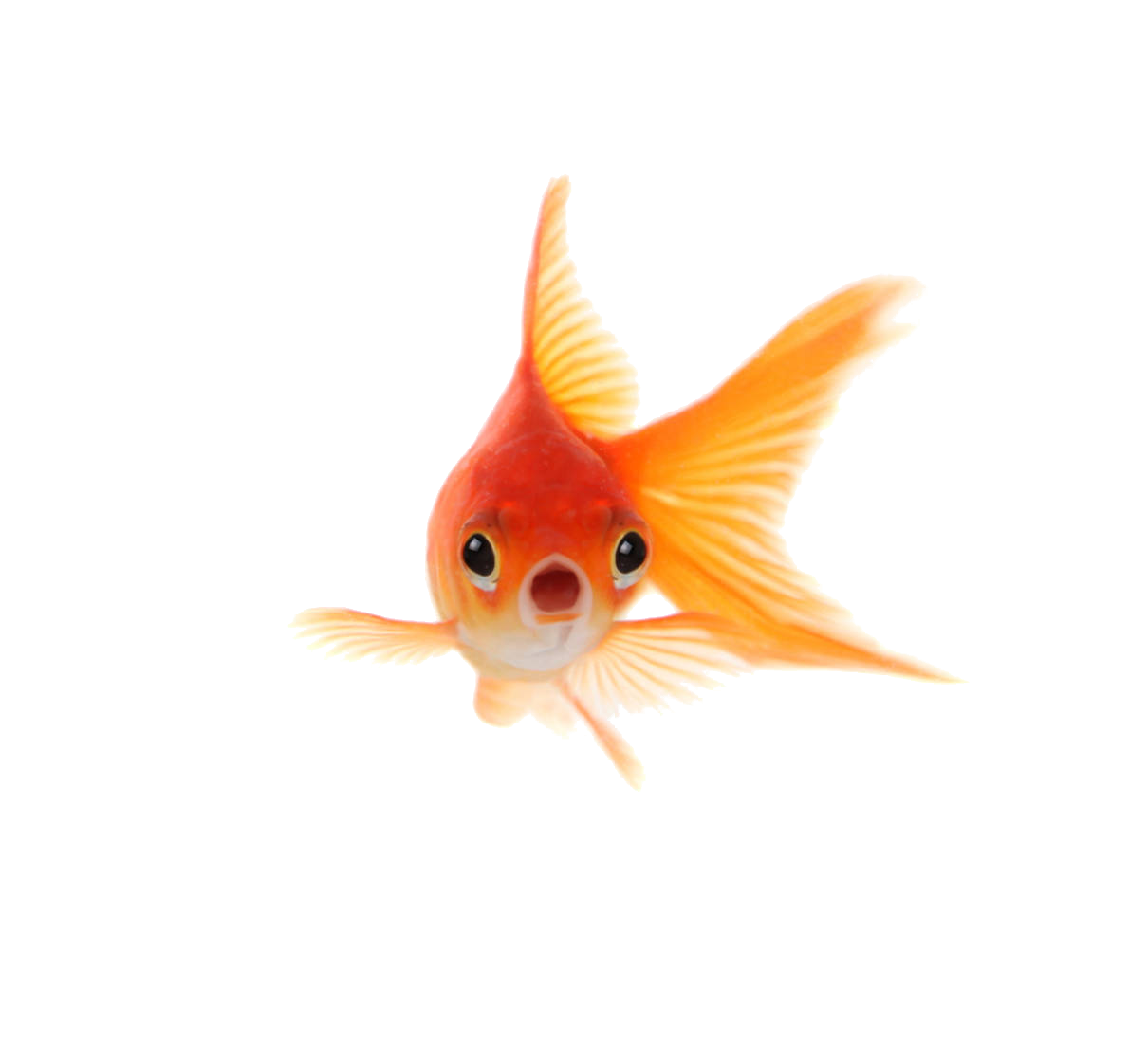 omnommilk:  LOOK AT THE GOLDFISH SWIMMING ON YOUR DASHBOARD