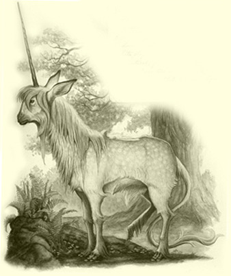 Unicorn by Tony DiTerlizzi The Spiderwick Chronicles