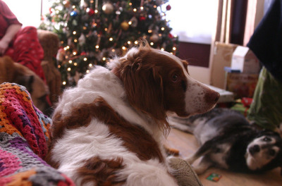 Christmas morning 2012 by aubrigail on Flickr.