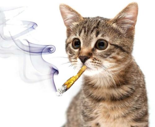 People are giving their pets medical marijuana and Mother Jones is ON it.