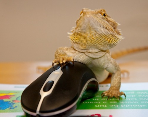 Computer Literate Lizard by Brian Scott