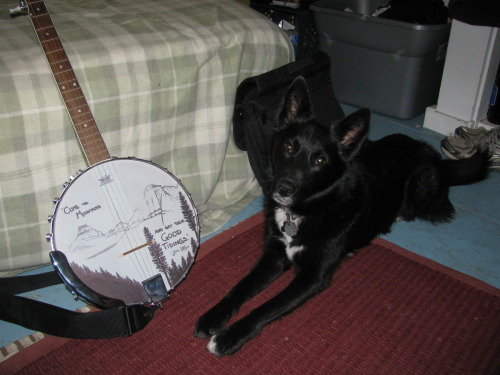 aldosnow:  Aldo approved banjo art.  I made a gift, Aldo enjoys it.