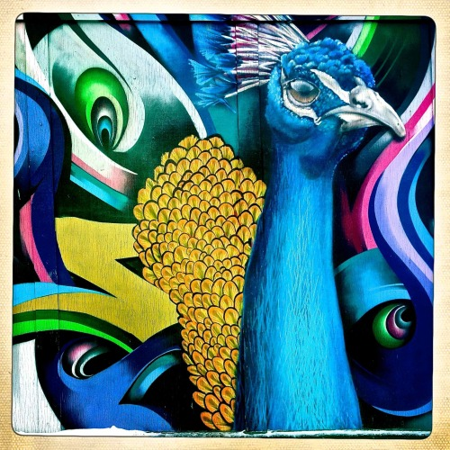 """Wall Mural""  For your daily dose of Hipstamatic this image of a peacock on a wall mural in downtown Fargo.  This mural is painted on a wall on the backside of a building not far from the Bismarck bar. Hipstamatic 261 with John S lens and Ina's 1969 film no flash Check out my blog at http://www.hipstamaticpics.com"
