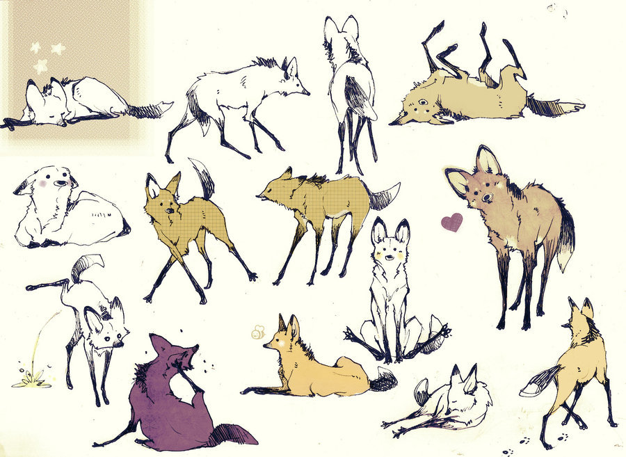 brooksnshit:  A lot of Maned Wolf ~LetiziaMoran